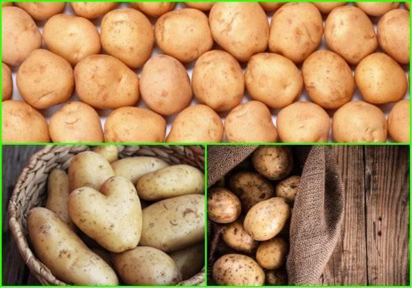 Где и как хранить картошку в квартире, чтобы клубни не портились и сохраняли питательную ценность