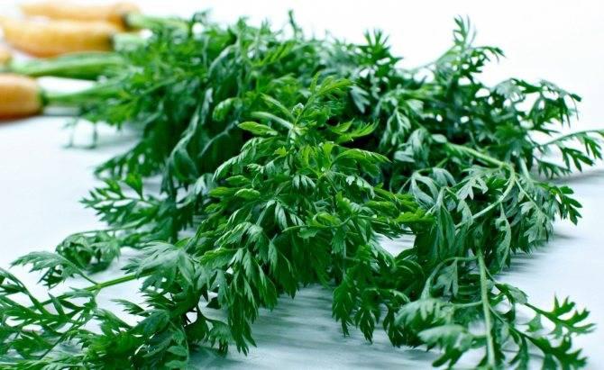 Как подготовить морковь к хранению на зиму: что делать после уборки, как ее обрезать, сушить и дезинфицировать? selo.guru — интернет портал о сельском хозяйстве