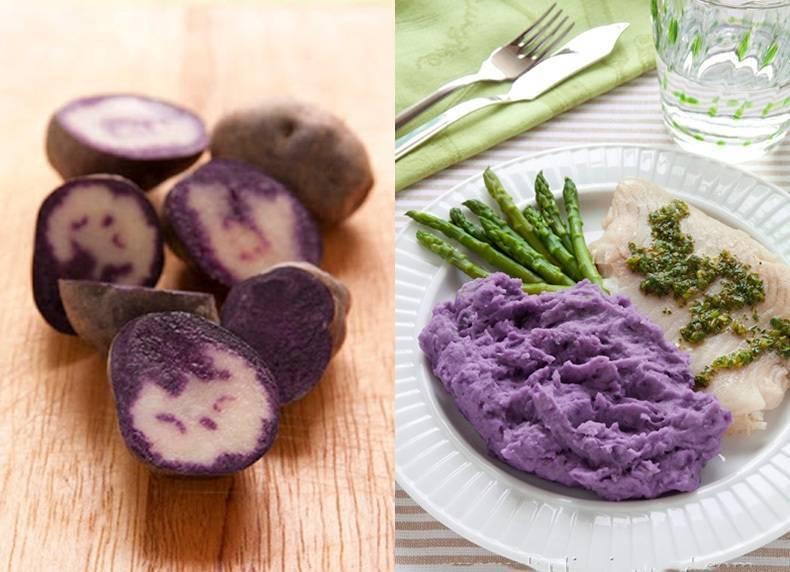 Фиолетовый картофель - сорта, посадка и уход, фото и видео