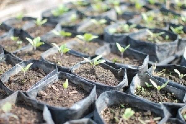 Выращивание пшеницы: посев, подкормка и сбор урожая   cельхозпортал