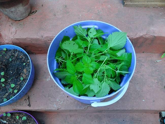 Удобрение из крапивы, для каких растений подходит?