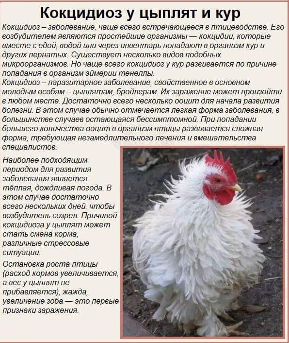 Вирусные selo.guru — интернет портал о сельском хозяйстве