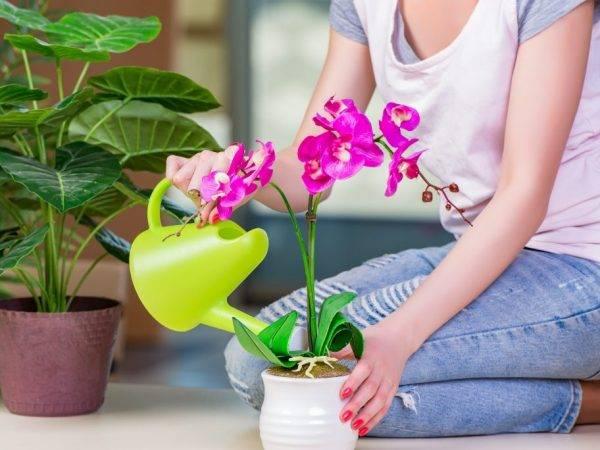 Орхидея дендробиум нобиле — что делать после цветения и уход в домашних условиях ?