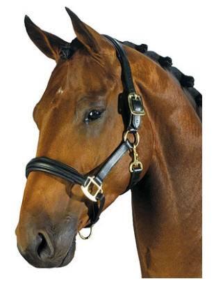 Уздечка и недоуздок для лошадей: их описание и фото уздечка и недоуздок для лошадей: их описание и фото