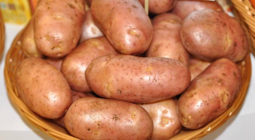 ᐉ сорт картофеля «любава» – описание и фото - roza-zanoza.ru