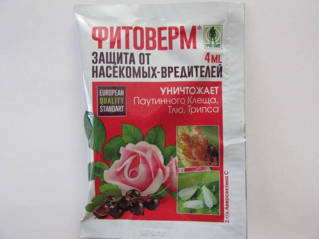 Фитоверм для комнатных растений — как разводить и применять?