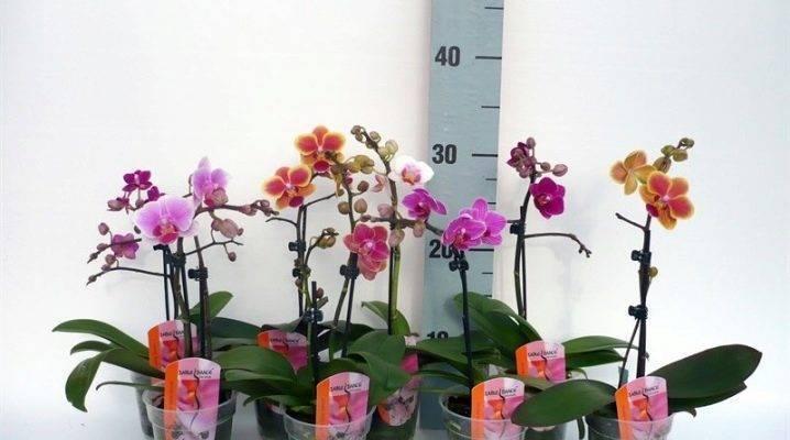 Растения экваториального леса