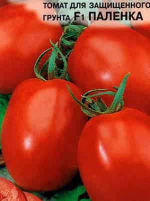 """Помидоры """"паленка"""": фото и описание гибридного сорта томата русский фермер"""