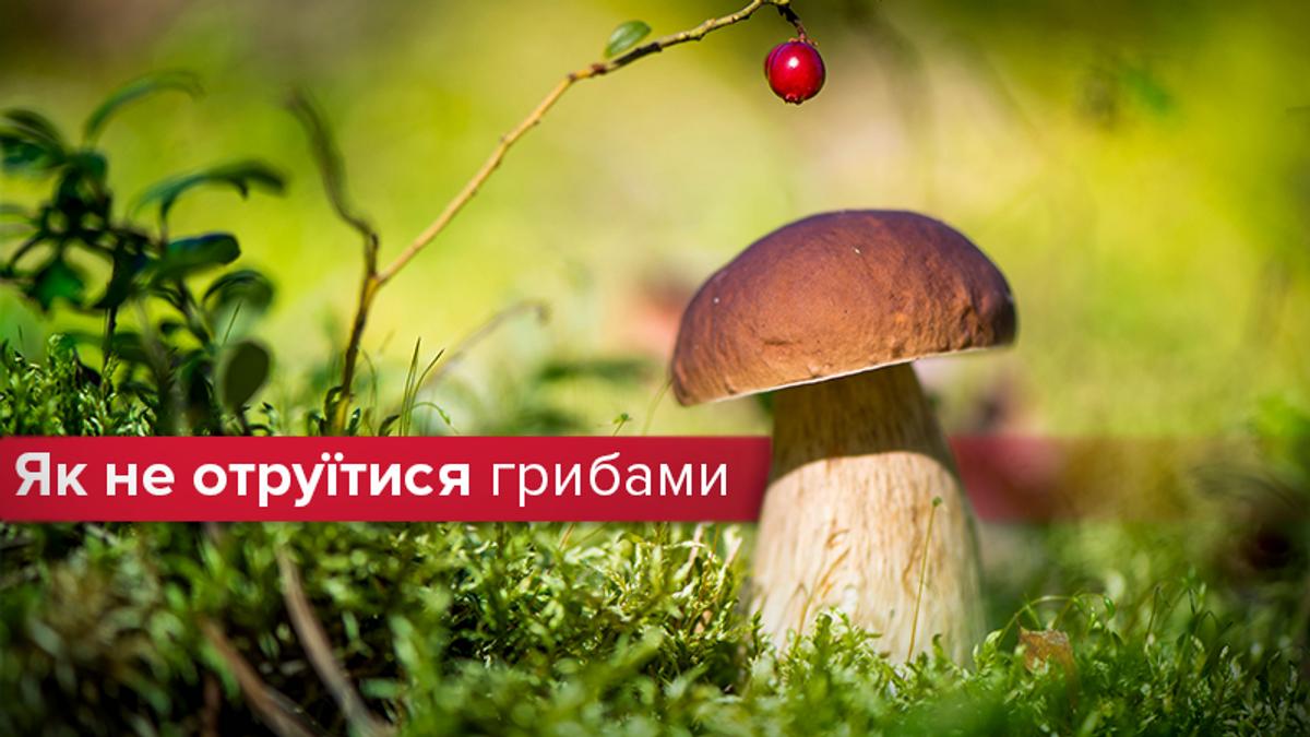 Топ-5 наиболее опасных грибов