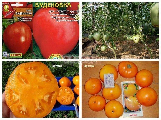 Томат хурма - характеристика и описание сорта, нюансы выращивания и ухода