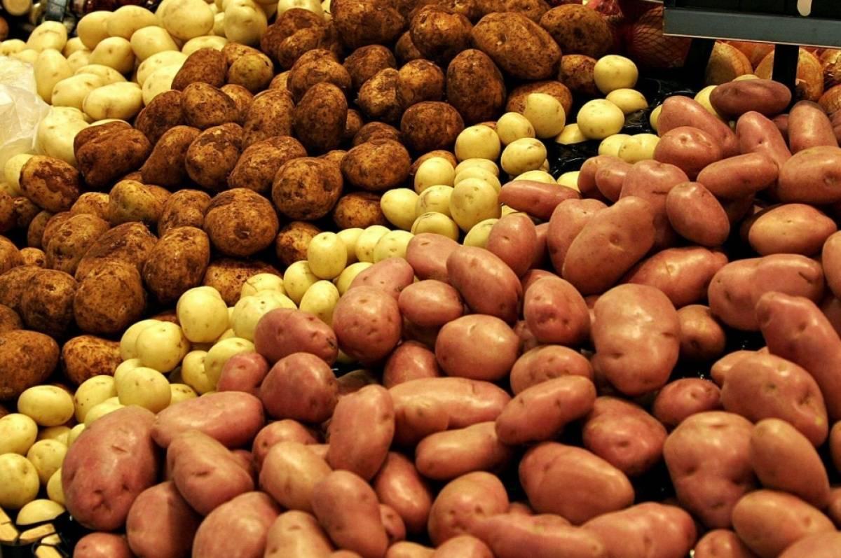 Какие удобрения лучше вносить в лунки при посадке картофеля