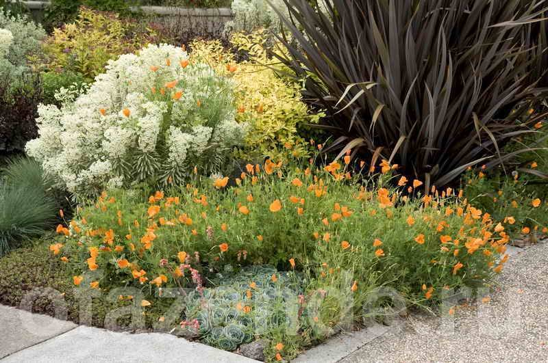 Декоративные вечнозеленые растения и кустарники для сада: фото и названия