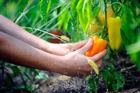 Смешанные посадки — каким культурам лучше расти вместе?. лучшие растения-соседи. фото — ботаничка.ru