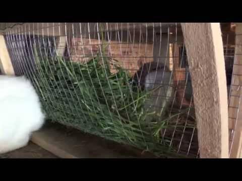 Устройство сенника для кроликов