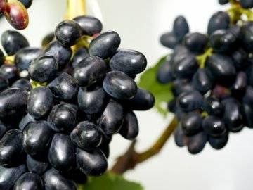 Виноград чарли — рассмотрим тщательно