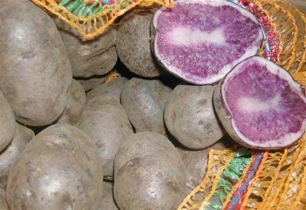 Описание фиолетовых сортов картофеля