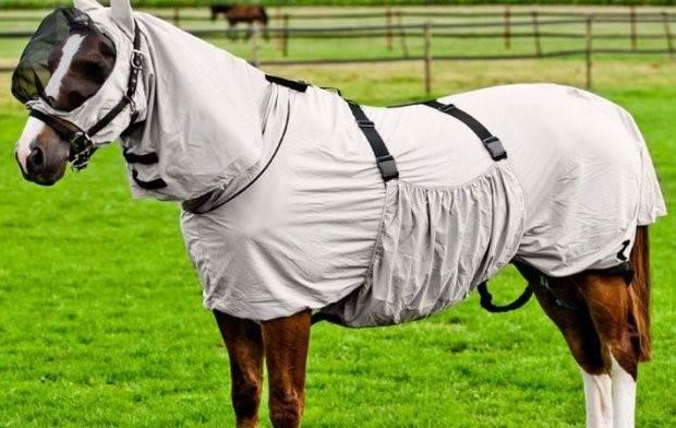 Амуниция для лошадей (набор, комплект): как сделать своими руками, фото и название
