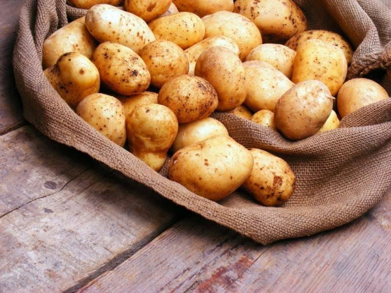 ✅ кемеровчанин: описание сорта картофеля, характеристики, агротехника - tehnomir32.ru