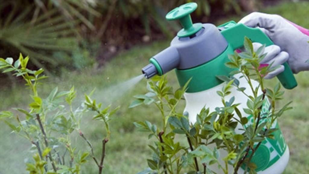 Обзор средств защиты растений: химия и физические методы