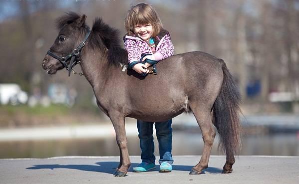 ᐉ карликовая лошадь - особенности содержания и ухода - zooon.ru
