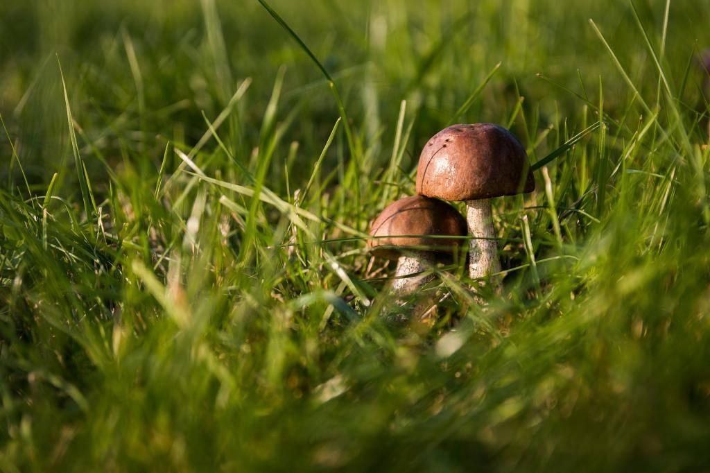 Можно ли на диете есть грибы. можно ли есть грибы на диете при похудении: варианты диет и грибы в рационе