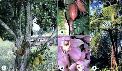 Какие природные зоны есть в южной америке: описание, климат, почвы, животные и растения — природа мира