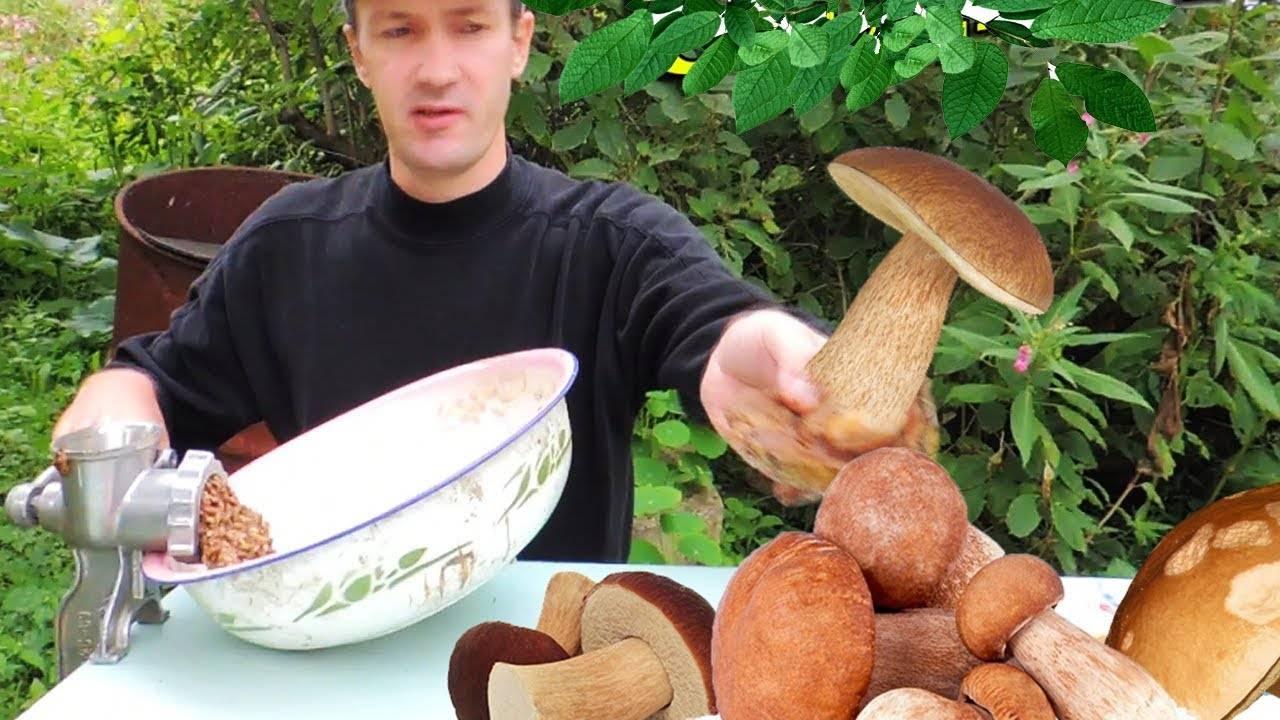 Промышленное выращивание белых грибов в домашних условиях. выгодное грибоводство. | cельхозпортал