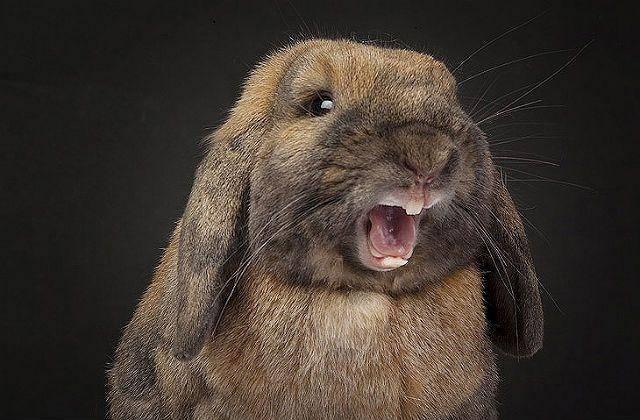 Почему кусаются кролики и как их от этого отучить