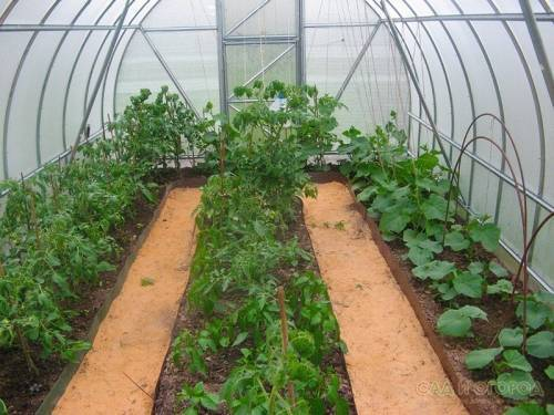 Высадка рассады помидор в теплицу: когда и как высаживать, сроки, время, благоприятные дни, пошаговая инструкция, уход, выращивание, подкормки
