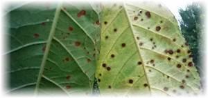 Болезни черешни: описание с фотографиями и способы лечения - огород, сад, балкон - медиаплатформа миртесен