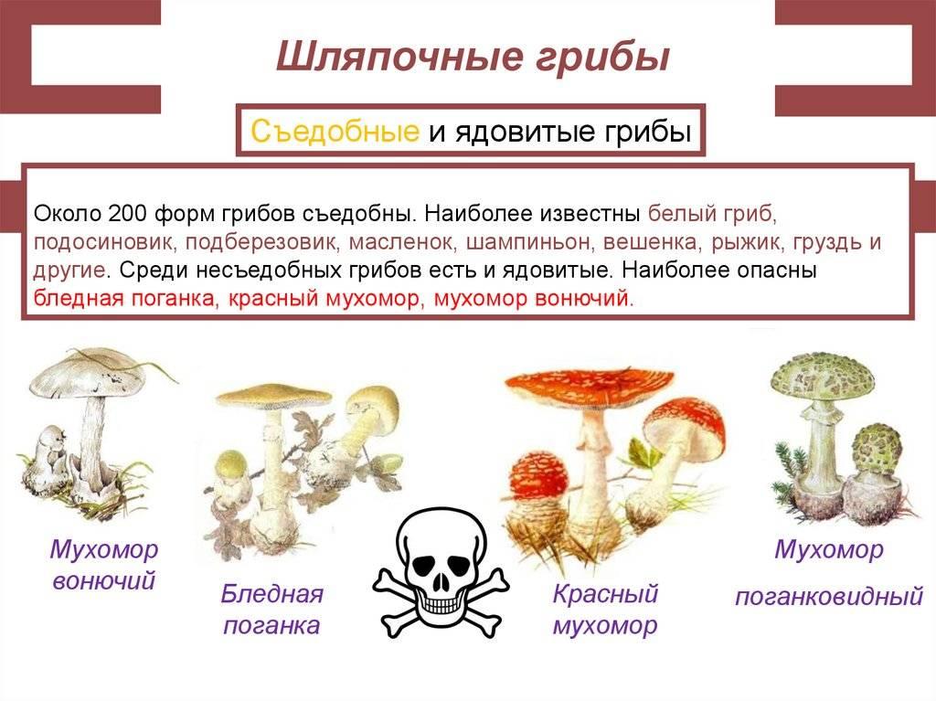 Несовершенные грибы