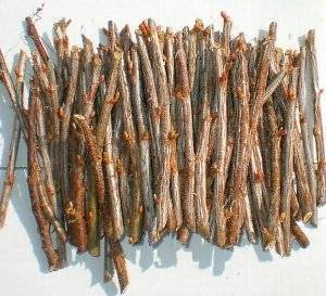 Зимнее черенкование смородины: пошаговый мастер-класс