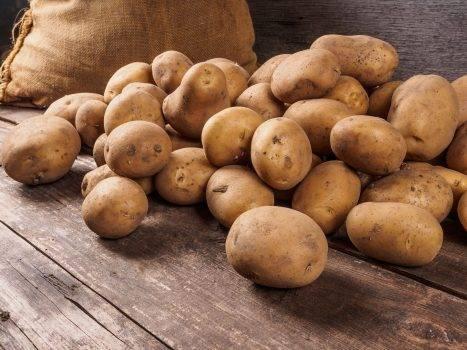 Сорт картофеля «коломбо» («коломба»): характеристика, секреты успешного выращивания
