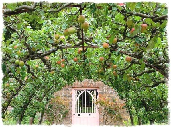 Как пересадить яблоню в другое место - правильная пересадка весной и осенью