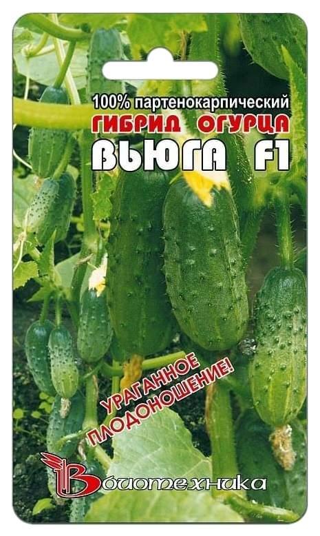Топ – 20 сортов огурцов для открытого грунта - огород, сад, балкон - медиаплатформа миртесен