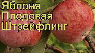 """Яблоня """"штрейфлинг:"""" описание сорта, фото, отзывы"""