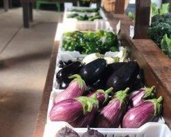 Баклажаны – полезные свойства, состав и противопоказания
