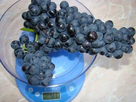 Виноград культурный 'плечистик' — описание сорта, характеристики