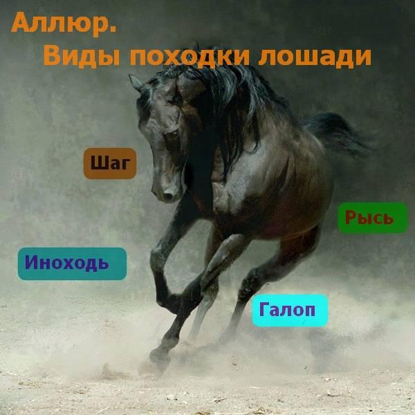 Какие существуют виды бега лошади? 2021