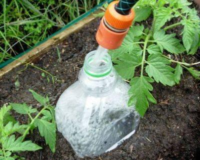 Капельный полив для помидоров в теплице   огородник