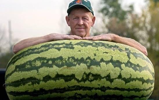 Самое большое в мире яблоко - дневник садовода semena-zdes.ru