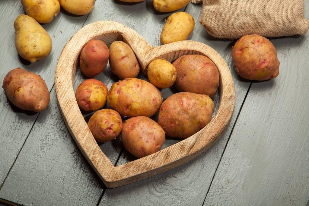 ᐉ сорт картофеля «свитанок киевский» – описание и фото - roza-zanoza.ru