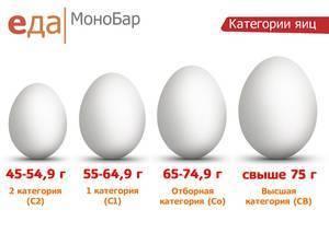Сколько весит перепелиное яйцо: сырое, вареное без скорлупы