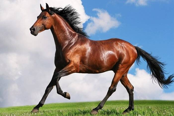 Сколько живут лошади: разбираемся по пунктам