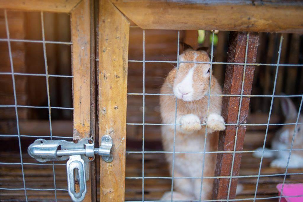 Промышленные заводские клетки для кроликов: критерии выбора, чертежи, изготовление своими руками