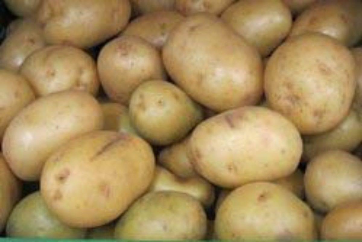 Картофель наташа – описание сорта, фото, отзывы