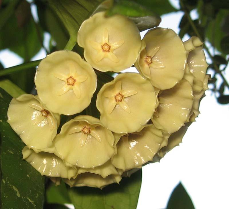 Можно ли держать дома орхидеи: приметы и суеверия, его магические свойства, а также к чему дарят цветок женщине и кому он подходит