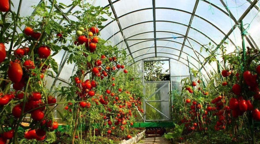 Опилки в огороде: польза или вред
