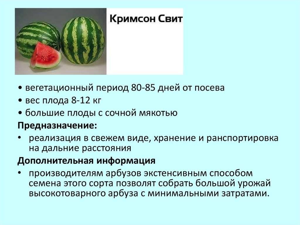 Как сажать арбузы на участке, выращивание рассады арбузов-vsadu.ru
