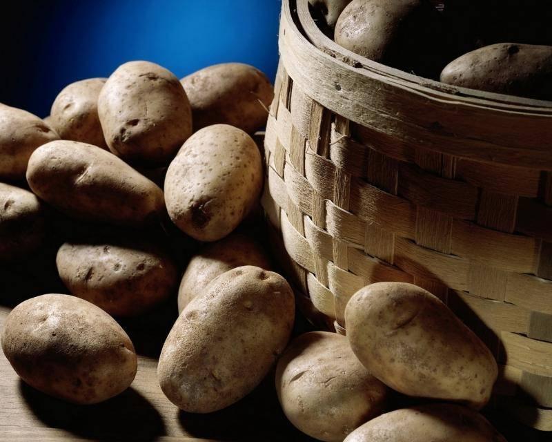 Описание сорта картошки венета